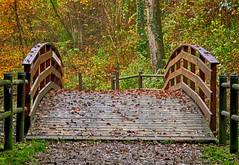 Autunno (@antonello) Tags: autunno colori colors ponte passerella bergamo collina bosco