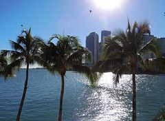 USA (Florida-Miami) Sun rays on the sea (ustung) Tags: us florida miami downtown evening sunray sea seascape outdoor palm tree plant nikon