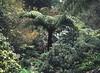 Tree fern (Matthew Paul Argall) Tags: 110 110film fixedfocus meniscuslens kodakgimini lomographyfilm treefern ferntree fern green garden gardens forest unlimitedphotos grainyfilm plant plants yarraranges