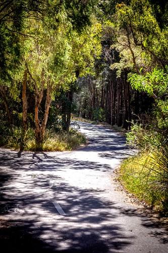 Badu Mangroves Sydney-17