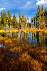 The Clearing (stevenbulman44) Tags: forest polarizer lseries lens autumn canon landscape outdoor color sky blue shadow