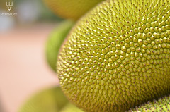 Jack Fruit and its skin texture (adithyavm) Tags: macro fruits jackfruit depth field texture