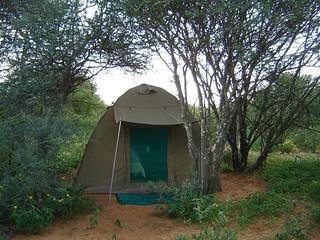 Namibia Plainsgame Hunt - Kalahari Desert 27