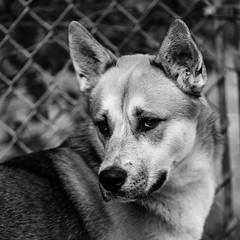 Haus19Nov1600028-Edit.jpg (fredstrobel) Tags: dogs pawsatanta phototype atlanta blackandwhite usa animals ga pets places pawsdogs decatur georgia unitedstates us