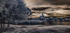 Lindo Lake In IR (Bill Gracey) Tags: ir infrared infraredphotography convertedinfraredcamera lindolake clouds sky trees highcontrast nature naturalbeauty surreal
