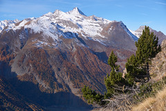 Grivola and the last trees standing (Marco MCMLXXVI) Tags: cogne aosta valle italy alps alpi granparadiso grivola mountain montagna autumn fall autunno outdoor landscape view vista panorama hiking escursionismo mountaineering summit first snow neve trees tree alberi colors crag valley canyon cliff mountainside forest sony ilce6000 a6000 pz1650 europe travel tourism mountainpeak mountainridge rockformation