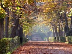Parque del Retiro, Madrid (robin denton) Tags: parquedelretiro madrid spain espana park parque retiro autumn autumnleaves leaves trees