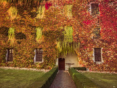 autumn strokes... (clo dallas) Tags: autumn autunno colors strokes landscape paesaggio parete leaves canon nature vitecanadese warmcolors wall novacella explore explored inexplore