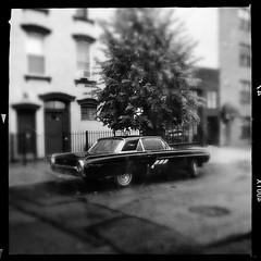 Thunderbird (street level) Tags: thunderbird williamsburg brooklyn newyorkcity nyc classiccar gothamist