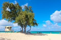 Beach! (when I'm on vacation) Tags: kailua beach hawaii oahu honolulu usa sky ocean sea tree nature