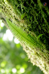 Grow (omar de luna) Tags: xilitla laspozas edwardjames slp mexico pentax jungle nature sierra