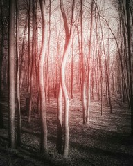 @FYABRIANSCOTT (fya_brianscott) Tags: abstract poetry nature earth world travel woods outside nj trees branches ref daydream sleepwalking dream nikon light shadow day explore fyabrianscott