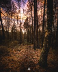 Contrasted Colour (Augmented Reality Images (Getty Contributor)) Tags: autumn canon colours fall forest hdr landscape leefilters longexposure nature perthshire scotland sunset trees woodland