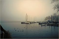 2016 11 26 Schwanenwerder - 1 (Mister-Mastro) Tags: schwanenwerder berlin nebel fog wannsee havel hafen harbour segelboot boat sailing kalt cold blesshhner