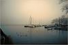 2016 11 26 Schwanenwerder - 1 (Mister-Mastro) Tags: schwanenwerder berlin nebel fog wannsee havel hafen harbour segelboot boat sailing kalt cold blesshühner