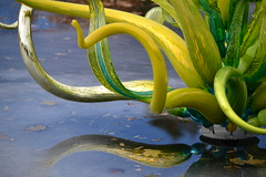 More Chihuly Glass (KsCattails) Tags: art artist botanicalgarden chihuly denver exhibit glass