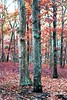 IMG_0661~Twins (Cyberlens 40D) Tags: nj trees foliage leaves canon parks forest trunks scenery nature botany