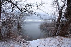 Winter Lake (claudiool) Tags: switzerland peace dry branches snow tree lake albero freddo ghiaccio icy ice