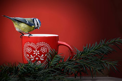 tea time (simo m.) Tags: cup red bird bluetit