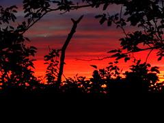 New York Sunset (dimaruss34) Tags: newyork brooklyn dmitriyfomenko image fall autumn sky clouds sunset foliage