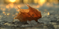 winter begins (joy.jordan) Tags: leaf snow ice texture light sunrise bokeh winter