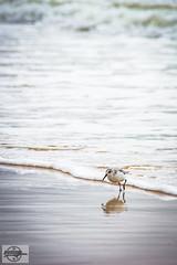 IMG_3729_12-4-16_Orange Beach, AL (Mo-Pump) Tags: gulfofmexico gulfcoast alabamacoast alabama orangebeach al beach boardwalk alabamapoint