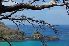 Sancho (dotcomdotbr) Tags: fernando noronha sony a77 paisagem natureza sancho gua mar praia rvore galho atob p vermelho sal1650