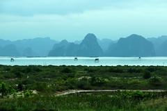Fishing Huts in the Bay (steve_whitmarsh) Tags: vietnam asia orient halongbay water sea rocks