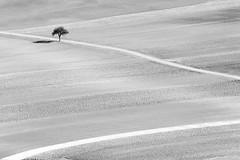 Solo (CoolMcFlash) Tags: tree landscape sw blackandwhite blackwhite shadow field road minimalistic minimalism minimalistisch simple simpel negativespace copyspace nature canon eos 60d tamron b008 18270 baum landschaft bw schwarzweis schatten feld weg natur fotografie photography austria österreich