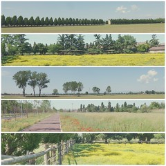 collage1 (storvandre) Tags: storvandre milano milan parco agricolo countryside lombardia lombardy bike biking