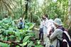 ...Botanical lesson....Manu/Peru (geolis06) Tags: geolis06 pérou peru perú amériquedusud southamerica ríomanu amazonie amazonia rainforest jungle forêt forest selva madrededios biospherereserve manu parcnationaldemanú manúnationalpark 2016 patrimoinemondial unesco unescoworldheritage unescosite pantiacollatour plant plante em5olympus olympusm1240mmf28