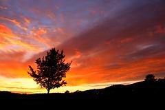 Saturday sunrise at the Epic Farmers Market (Wanderlust_73) Tags: autumn sunrise farmersmarket weekend australia canberra capitalregionfarmersmarket uploaded:by=flickrmobile flickriosapp:filter=nofilter