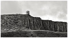 Park End Quarry , Holwick (wayman2011) Tags: trees rocks dales countydurham teesdale bwlandscapes holwick quarrys fujifilmx10