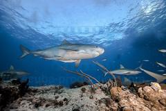 2014 03 TIGER BEACH-2329