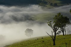 Numulgi (dustaway) Tags: morning trees winter fog landscape countryside day australia pasture valley nsw inversion northernrivers morninglandscape