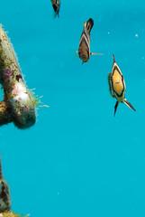 DSC_9884.jpg (d3_plus) Tags: sea sky beach japan scenery diving snorkeling  yg shizuoka    izu buoy parrotfish      minamiizu     nikon1  hirizo  knifejaw  nakagi nikon1j1 1nikkor185mmf18  beachhirizo knifejawyg parrotfishyg yg misakafishingport