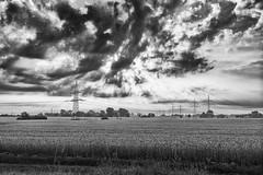 2014-07-17-Helmshagen-Feld-20140717-070022-i146-p0007-_Bearbeitet1164-iPhone_5s-4.12_mm-.jpg