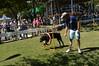DSC_0445 (Clube de Cãompo Hotel Fazenda para Cães) Tags: agility jundiaí estimacão clubedecãompo clubedecãompohotelfazendaparacães hotelfazendaparacãesituclubedecãompo