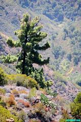 CC117 (mcshots) Tags: california travel trees summer plants usa mountains nature coast rocks hiking wildlife stock canyon malibu socal views geology mcshots rugged rockformations undeveloped losangelescounty corralcanyon