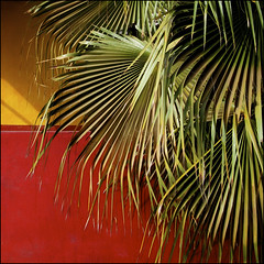 Africa (rita vita finzi) Tags: africa light red black green colors leaves yellow colours shadows palm walls nostress