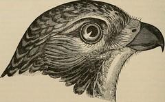 Anglų lietuvių žodynas. Žodis scapular reiškia  n  (vienuolių) pelerina  a anat. mentikaulio lietuviškai.