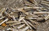 Moticius (sjnewton) Tags: uk sea england shells art beach seaside sand nikon july lincolnshire shore bivalve 2014 ensisarcuatus