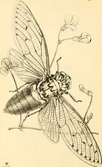 Anglų lietuvių žodynas. Žodis coriaceous reiškia a panašus į odą; kietas (kaip oda) lietuviškai.