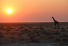 Namibia-2589 (Francesca Braghetta) Tags: africa travel desert dunes lion namibia viaggi travelblog etosha himba namib avventure viaggiare avventurenelmondo viaggiavventurenelmondo sussveil inviaggioconfrancesca