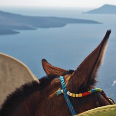 Santorini donkey after work - up and away (Happy! - Andrea) Tags: happy andrea olympus zuiko omd em1 andreakd