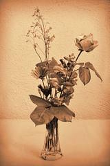 Vintage floral composition (*SevePhoto*) Tags: life italy vintage nikon italia severino fiori nikkor viterbo lazio composizione lexar seppia 2014 seve nital bassanoromano d3100 bassanoromanovt sevephoto