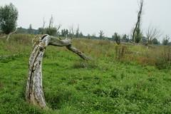 DSC06388 (Ton Smilde) Tags: oostvaardersplassen naturereserveinthenetherlands