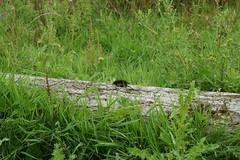 DSC06390 (Ton Smilde) Tags: oostvaardersplassen naturereserveinthenetherlands