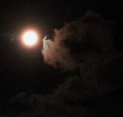 dog laying down sniffing moon (d1pinklady) Tags: dog moon clouds super galaxy