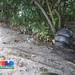 Marine trash - bagged trash above high water line